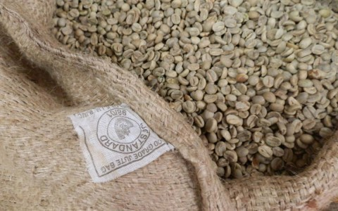 Materia Prima Café Verde